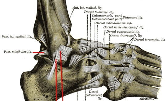 Ankle Sprains – Part 1: Definition and Prevention